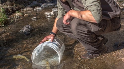 Andy Dean-Gila trout biologist New Mexico Fish and Wildlife Conservation Office-releases Gila trout into Mineral Creek photo Craig Springer USFWS resized