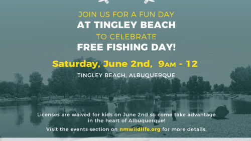 Tingley Beach Flyer-01 (1)