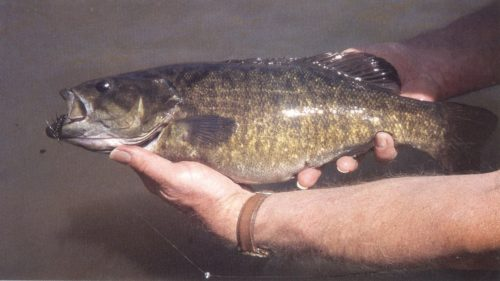 Dutch with Smallmouth Bass (1)